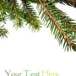 futro gałąź drzewa — Zdjęcie stockowe