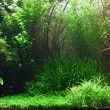 Freshwater aquarium — Photo