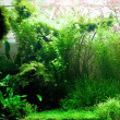 Stock Photo: Aquarium plants