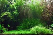 Aquarium d'eau douce — Photo