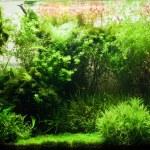 Acuario de agua dulce elegante — Foto de Stock