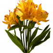 Alstroemeria — Stock Photo #8761353