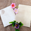 Two blank photo cards with flower — Stock Photo