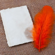 Feather and old blank card — Stock Photo