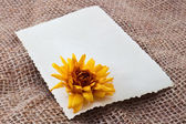 Blank card with flower — Stock Photo