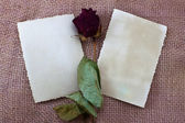 Two empty cards and rose — Stock Photo