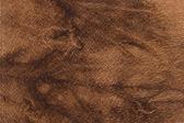 皮革装饰 — 图库照片