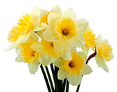 Bunch of narcissus — Stock Photo