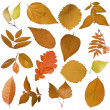 Tree leaves — Stock Photo