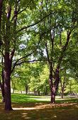 Akçaağaç ve linden park — Stok fotoğraf