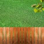 Fence near the grass — Stock Photo