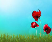 Kwiaty w trawie — Zdjęcie stockowe
