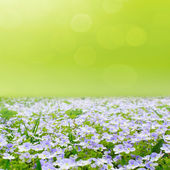 Flower field with abstract sky — Stock Photo