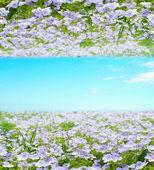 Natura streszczenie tło — Zdjęcie stockowe
