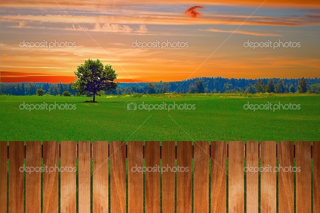 Alone tree in the field on sunset time near the fence — Stock Photo #8934567
