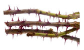Thorns — Stock Photo