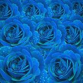 Rose élégant — Photo