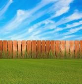 Green grassin garden — Stock Photo