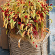 Decorative wheat ears - Stockfoto