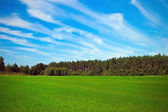 Meadow near forest — Stockfoto