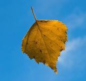 Leaf fall — Stock Photo