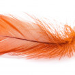 Orange feather — Stock Photo
