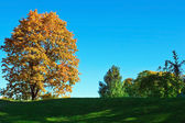 Autum background — Stock Photo