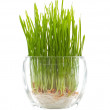 Grass — Stock Photo #9489821