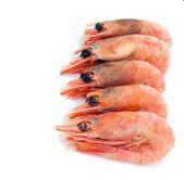 Skupina krevetami — Stock fotografie