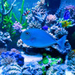 Aquarium — Stock Photo #9848125