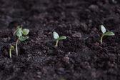 Plant in soil — Stock Photo