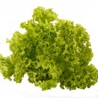 Bunch of lettuce on a white background — Stock Photo
