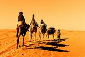 Camel Caravan in the Sahara Desert — Stock Photo