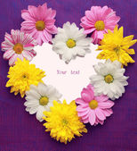 Framework, in the form of heart, from colors of chrysanthemums, on a violet — Stock Photo