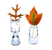 Two autumn leaves in small vases on white background — Stock Photo