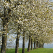 France, flowering trees in Aincourt — Stock Photo #10062145