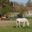 France, horses in the village of Oinville sur Montcient — Stockfoto