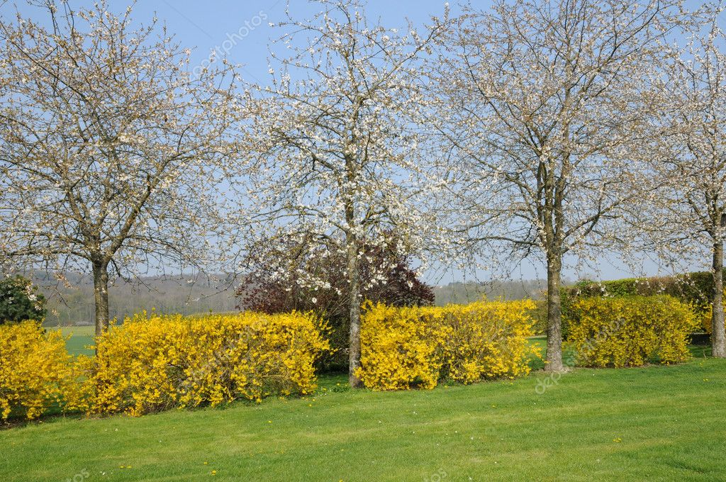 France, flowering trees in Aincourt  Stock Photo #10062070