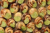Escargots de Bourgogne — Stock Photo