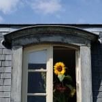 Mansard roof — Stock Photo