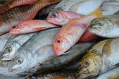 Fish shop — Stock Photo