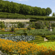 French formal garden of Villandry castel — Stock Photo
