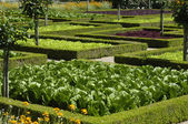French formal garden of Villandry castel — Stockfoto