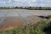 Francia, el estanque de evaporación de sal de guerande — Foto de Stock