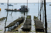 France, oyster farming on the coast of l Herbe — Stock Photo
