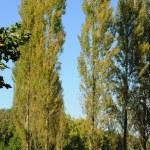 Park Jean-Jacques Rousseau in Ermenonville — Stock Photo #9266951