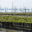France, oyster farming on the coast of l Herbe — Stockfoto