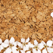 White flowers on corkboard — Stock Photo