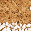 White flowers on corkboard — Stock Photo #10488204