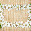 White flowers on burlap — Stock Photo #10488215